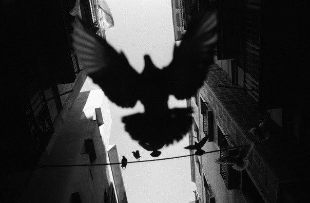 perierga.gr - Ο πιο παράξενος αερο-φωτογράφος στον κόσμο!