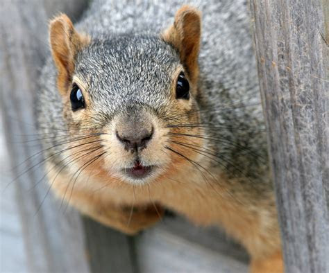 Is A Squirrel Smarter Than A Fifth Grader?   Atlas Obscura