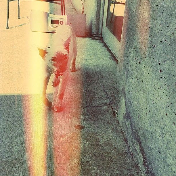 cat on a hot concrete deck @sid_kitty