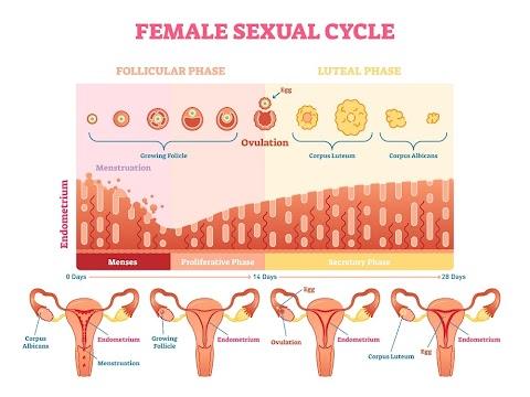 Track Kesuburan Wanita (Guna Ovulation Test Strips beli di Shopee) | Apps & FREE Printable Strip Chart