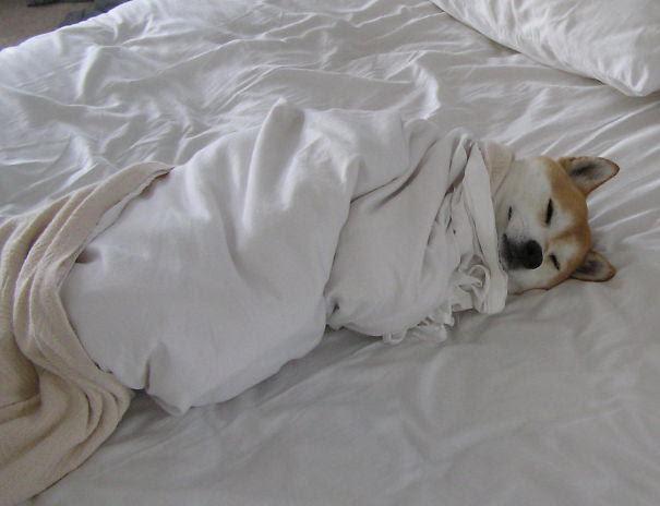 cachorro-enrolado-cama-frio