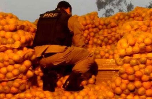 Foto: Divulgação / Polícia Rodoviária Federal