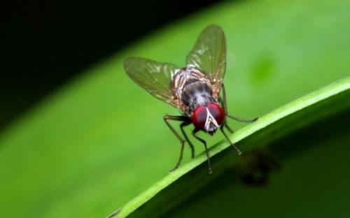 διαβάστε-τους-5-απλούς-τρόπους-για-να-απαλλαγείται-για-πάντα-από-τις-μύγες
