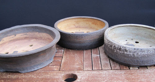 Larch bonsai pots