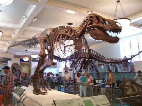 """n Tyrannus-Saurus-Rex, jedem wohlbekannt aus Blockbustern wie """"Jurassic Park"""" und """"Einem Land vor unserer Zeit"""""""