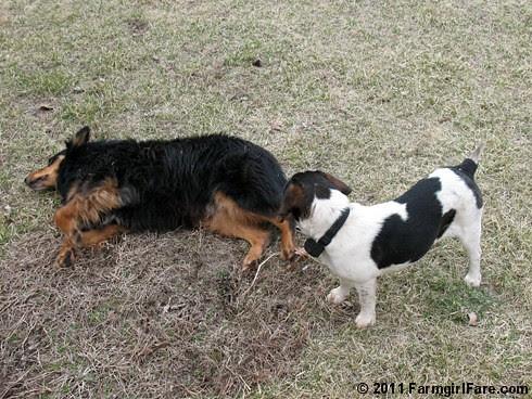 Best Buds Bert and Bear 6 - Farmgirl Fare