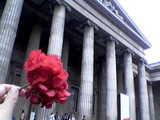 Flower_BritishMuseum