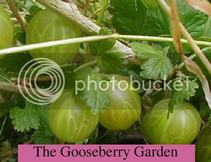 gooseberrygoespoetic