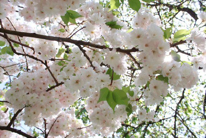 http://i402.photobucket.com/albums/pp103/Sushiina/cityglam/blossom3_zpsbe9f4c77.jpg