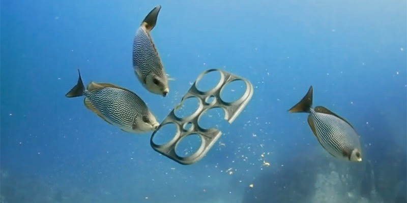 Team creates edible 6-pack rings for sea life, reduces plastic waste and saves lives