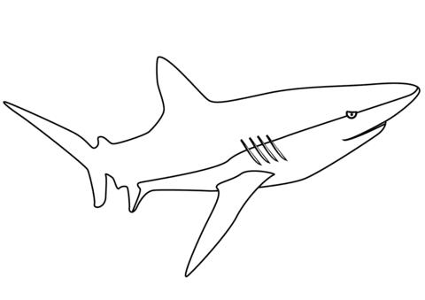 Squalo balena da colorare portalebambini for Disegno squalo per bambini
