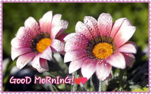 Good Morning Quote With Pink Flowers Pictures Photos And Images