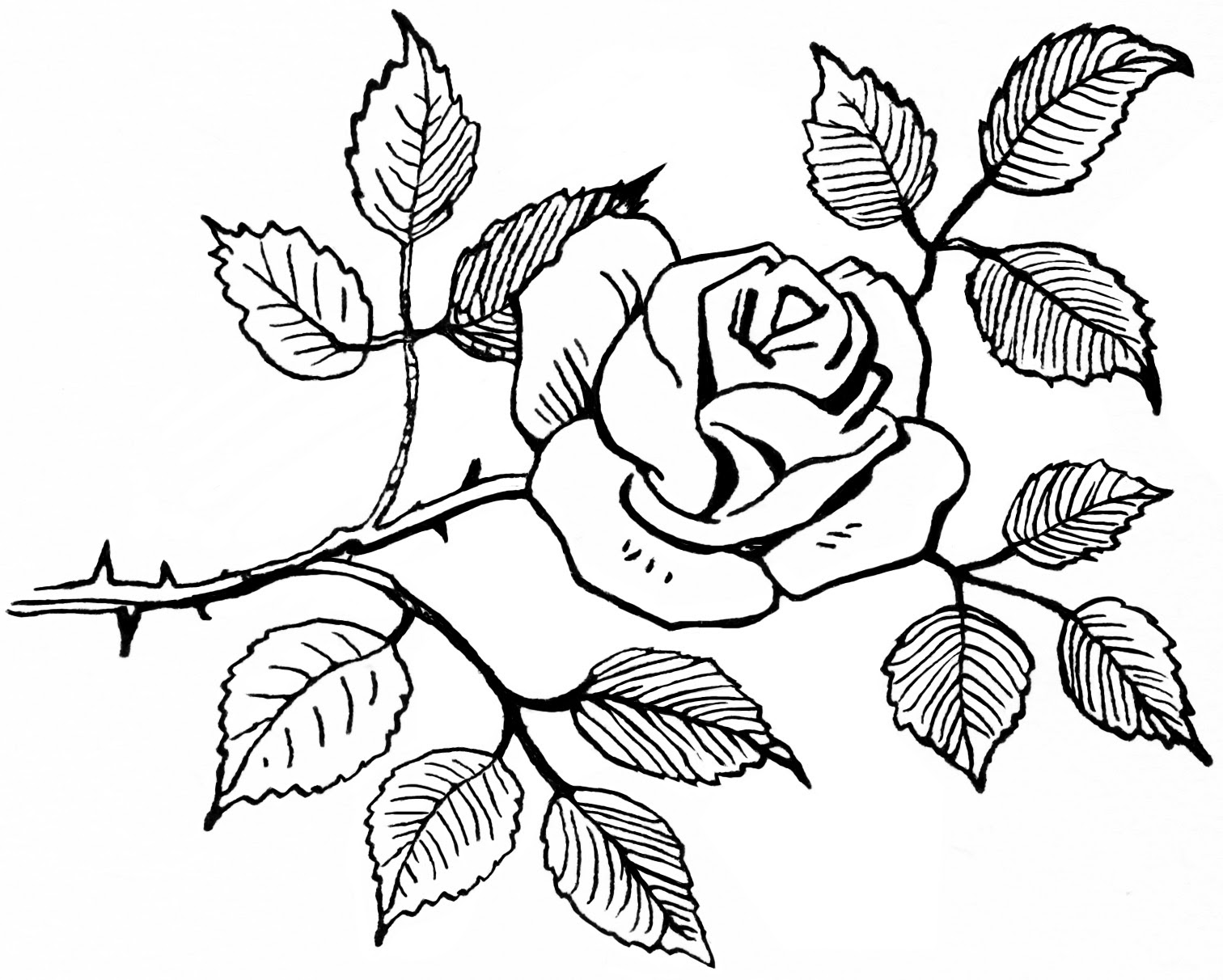 Black And White Rose Drawings Clipartsco