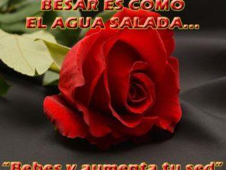 Descargar Imagenes De Rosas Rosas De Amor