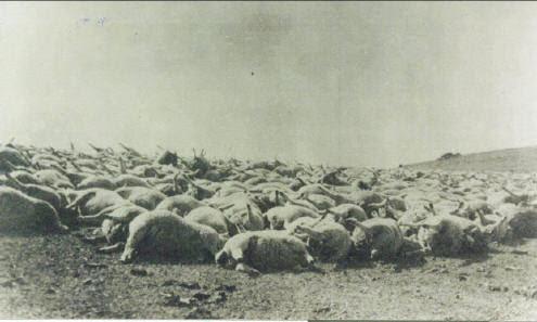 1939 sheep kill