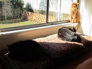 Three kitties sunning themselves