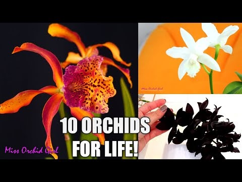 10 ORCHIDS I DONT WANT TO LIVE WITHOUT! MY MOST PRECIOUS ORCHIDS