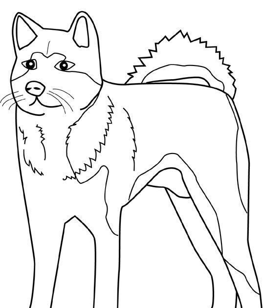 husky coloring pages online  workberdubeat coloring