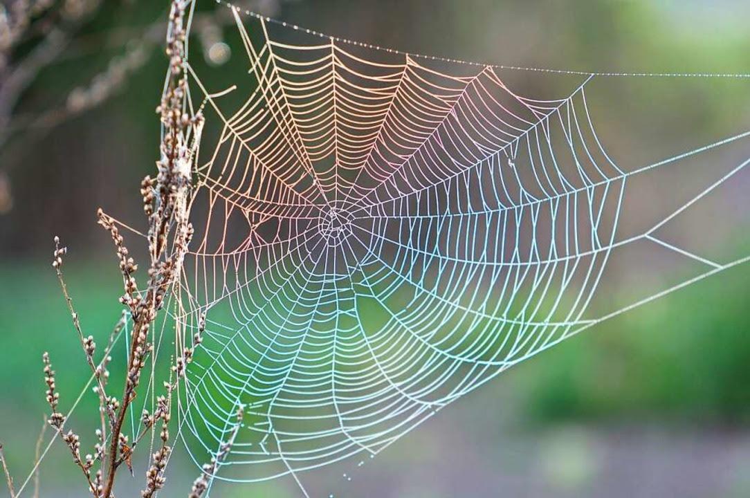 Warum Viele Sich Vor Spinnen Ekeln Und Was Man Dagegen Tun Kann