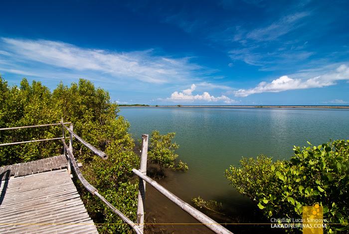 Blue Morning at Kalibo's Bakhawan Eco Park