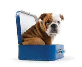 Viaja con tu mascota a cualquier parte: 7 consejos de TopperCan
