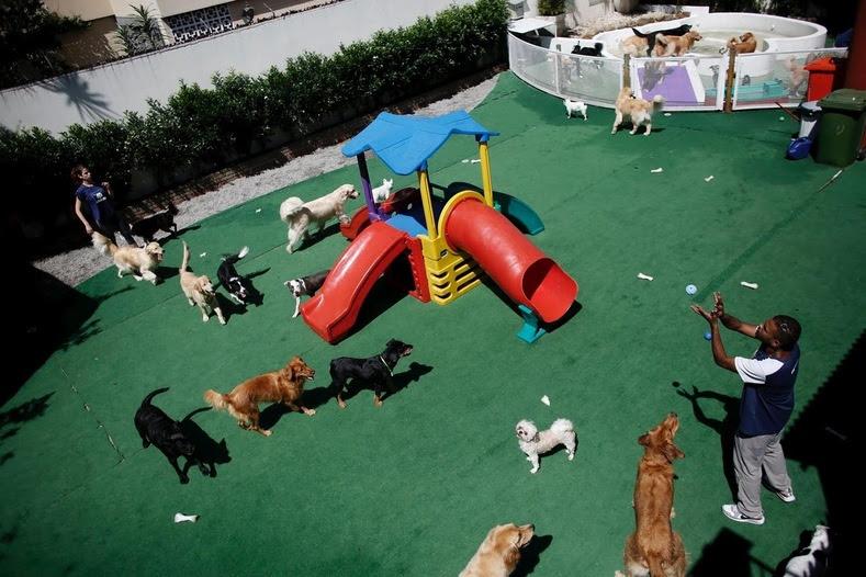 Animais de estimação para o cão Resort em São Paulo, Brasil, desfrutar de 800 metros quadrados de piscinas interiores e exteriores, esteiras e áreas de lazer.  carne fresca, refeições vegetais e uma lavagem diária e seco também estão incluídos nas taxas de dia, até 730 reais brasileiros (US $ 228) por mês.