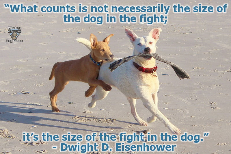 Best Dog Quotes Best Wireless Electric Dog Fence
