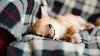 ¿Qué es el síndrome del perro pequeño?