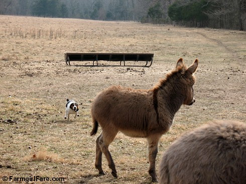 The Daily Donkey 88