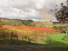 Autumn vineyard 1