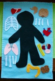 Fun for speech activities! Human Anatomy Felt Board - could do different poster frames of this kind of activity. Holiday & season mural... Food pyramid, color wheel.
