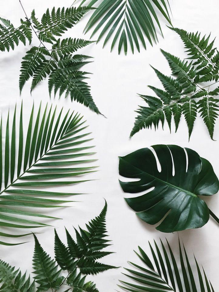 30 Beautiful Summer Tropical Leaf Background Tumblr Summer Background Download the perfect tropical leaves pictures. 30 beautiful summer tropical leaf