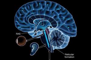 http://marketinghotelsandtourism.com/neurological-science-reticular-activating-system-triggers/