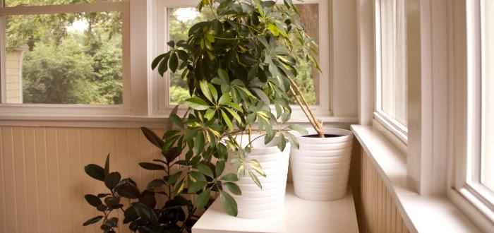 dash dot dotty dashdotdotty house tour interiors tan comfortable modern ikea chic house plants white pots