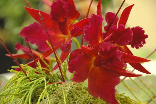 Detail, Flower Arrangement