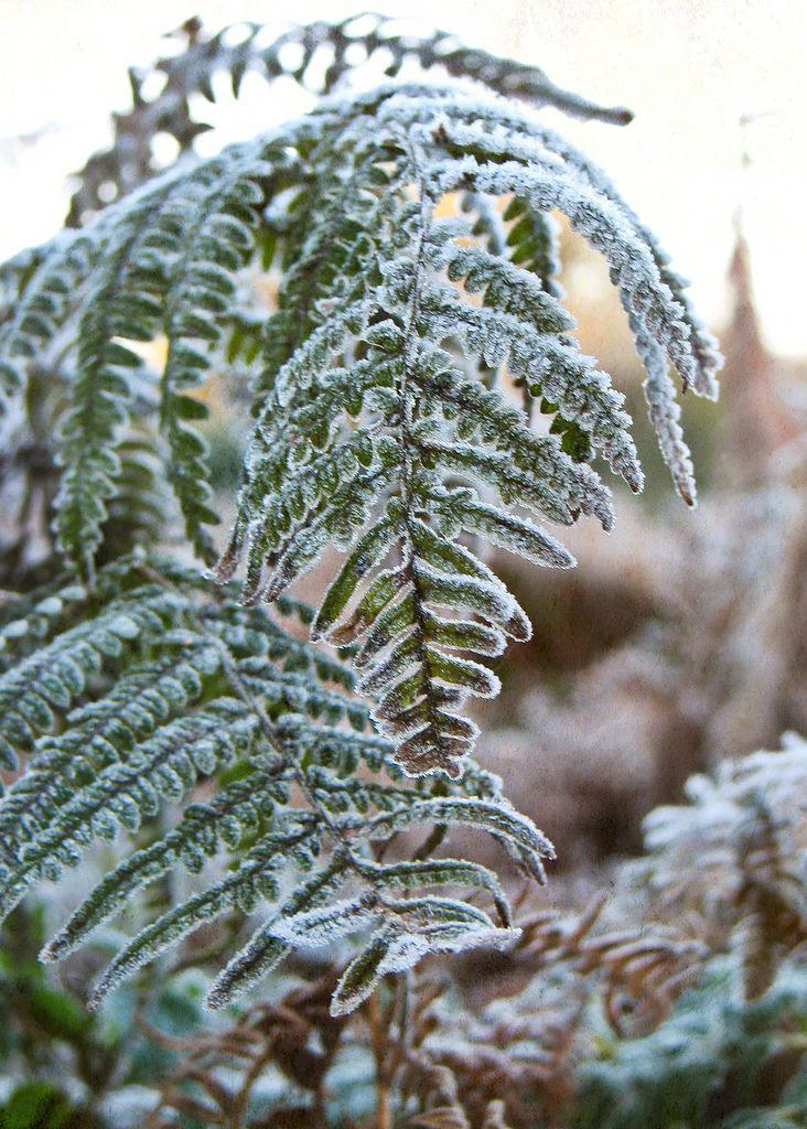 frost,macro