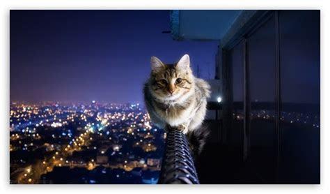 high definition cat wallpaper wallpapersafari