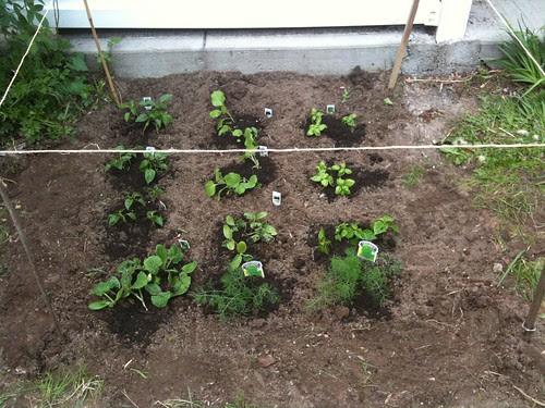 Assorted vegetables & herbs