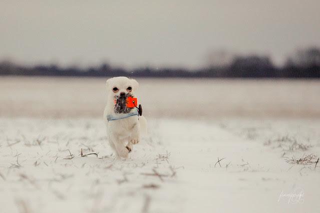 Dummy-Spaß im Schnee
