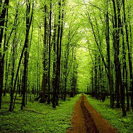 Alberi rboles trees chateaubriand for Alberi simili alle querce