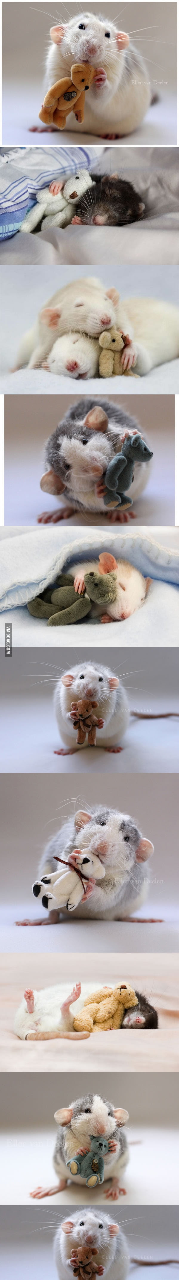 Rats With Teddy Bears