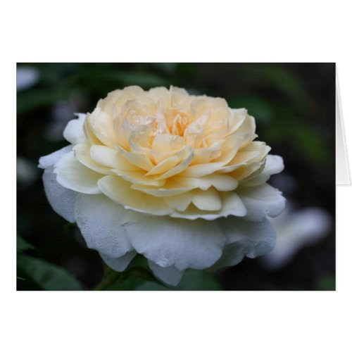 Soft Yellow Rose Flower Photo Greeting Note Card card
