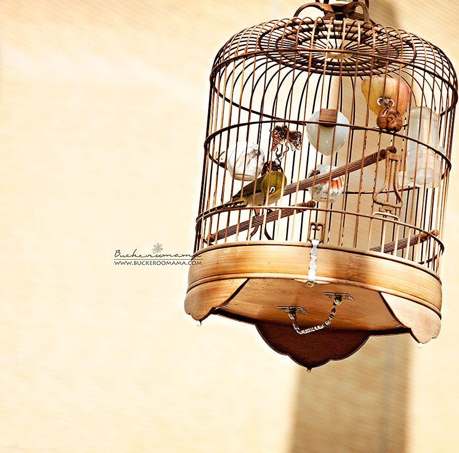 photo Bird-cage-3_zps7a7e39aa.jpg