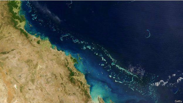 珊瑚白化與氣候改變有關。