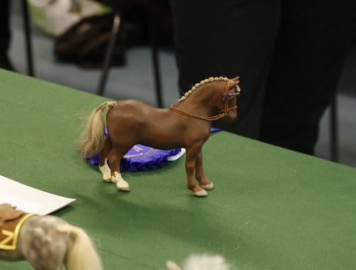 Vintage Cob Stallion