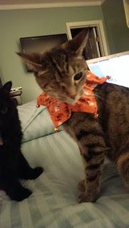 Maggie's Halloween jester collar