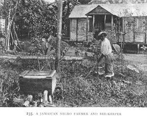 A Jamaican Negro farmer and be... Digital ID: 1228980. New York Public Library