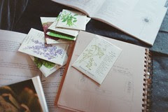 seed packets, garden map, old couch