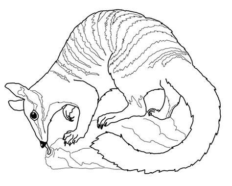 australian animal template animal templates