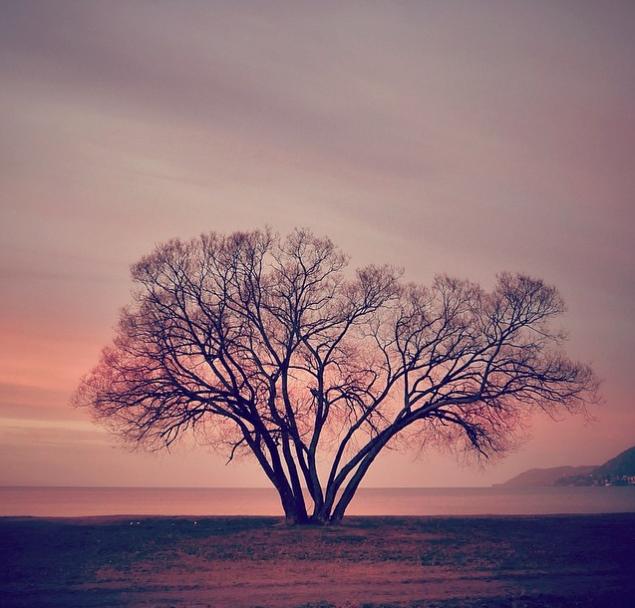 perierga.gr - Οι μεταβολές ενός δέντρου ανάλογα με τις εποχές!